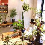 店内観葉植物