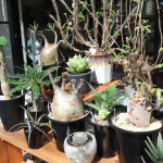 店外観葉植物
